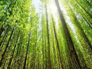 山东新型林业经营主体达23755个 数量居全国前列